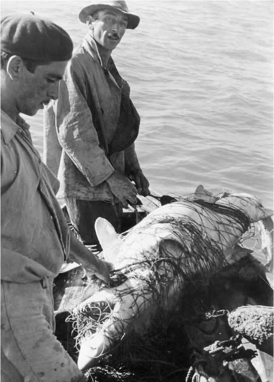 Pescando tiburones (aprox. 1950)